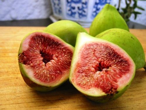 figseas