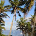 Niue palms