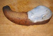 Cooking Geoduck with Virgil