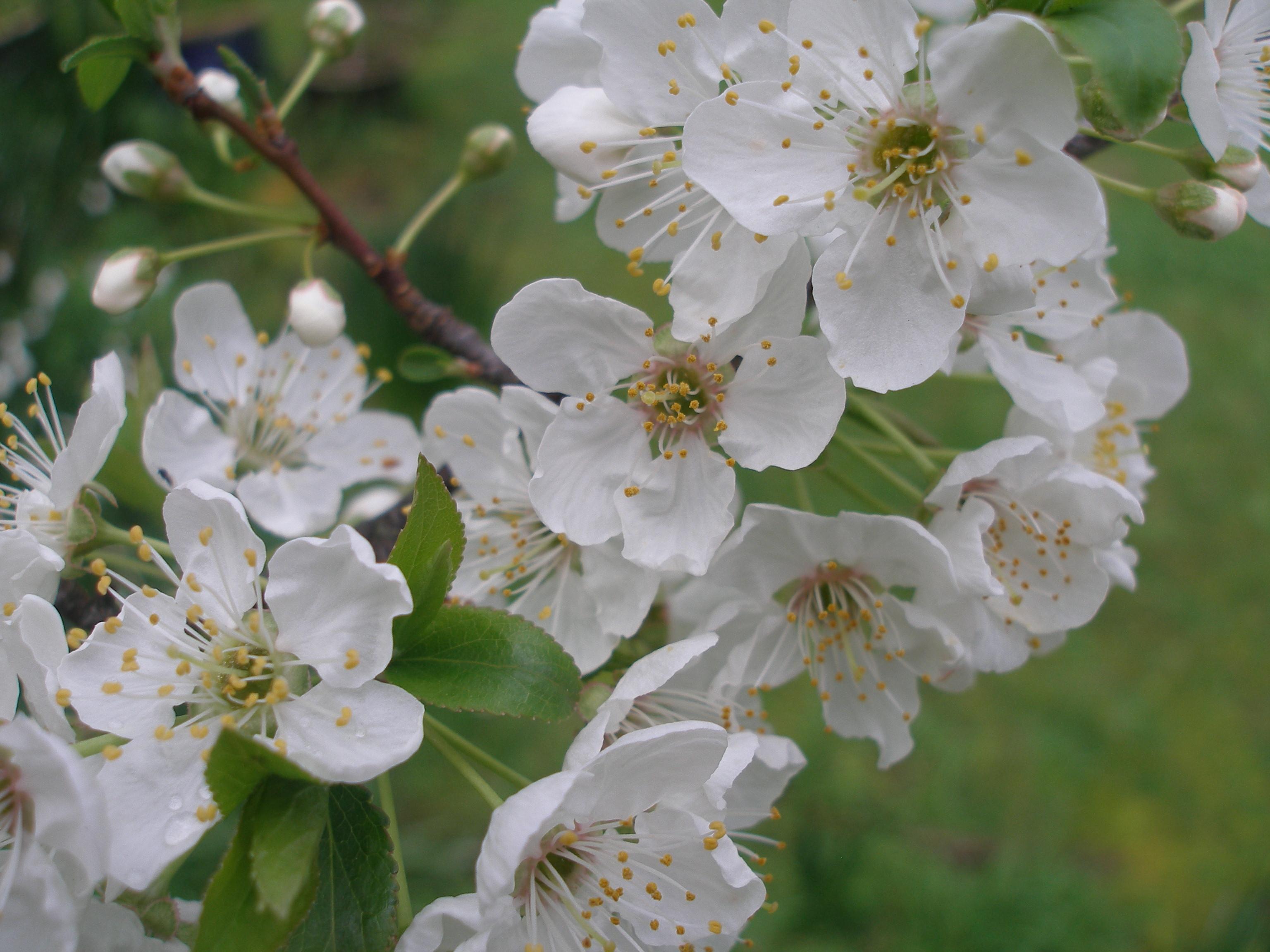 Budding Love: Spring at last!