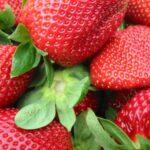 Strawberries Forever