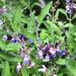 Herbal Summer