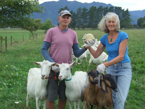 Aroha Goats Cheese
